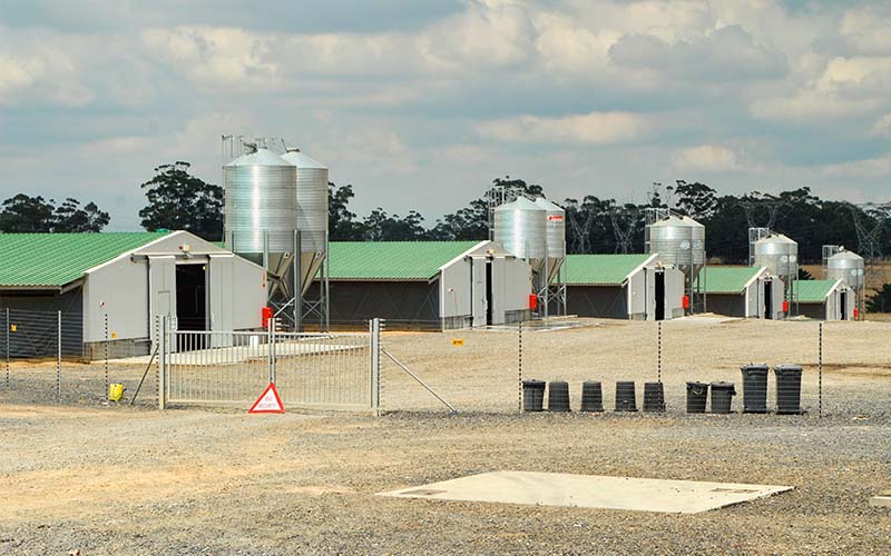 Poultry Shed Chicken Farm Building House For 10000 Chickens
